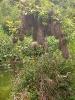 Casa na árvore Gache