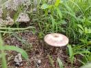 Cogumelo no jardim