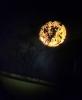 Florescer da Lua