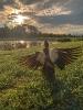 Pato assistindo ao pôr do sol